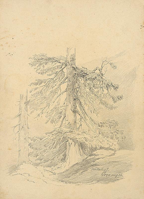 Eugen Wallachy – Štúdia ihličnatého stromu
