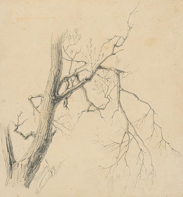 Eugen Wallachy - Štúdia stromu