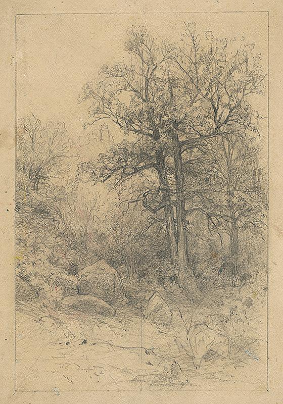 Ľudovít Čordák – Štúdia košatých stromov