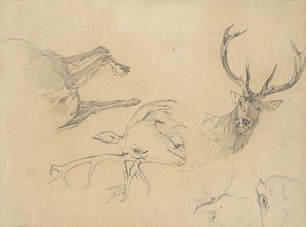 Ľudovít Čordák - Štúdia jeleních hláv