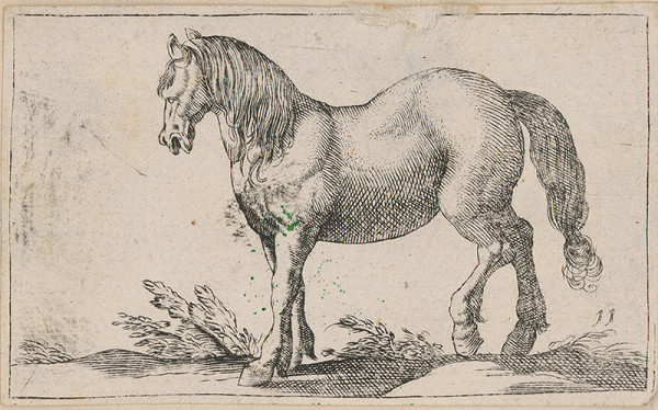 Stredoeurópsky grafik z 18. storočia – Kôň