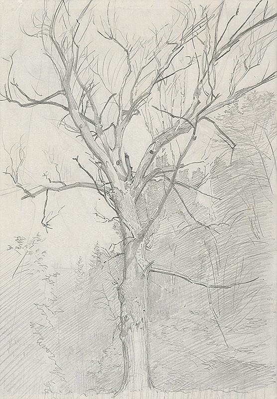 Ladislav Mednyánszky – Štúdia stromu