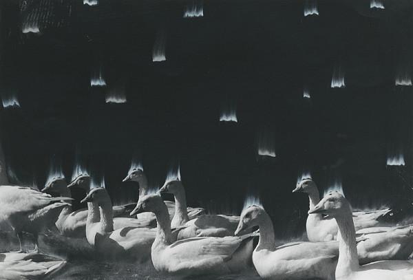 Peter Župník – Husi strácajú len perie
