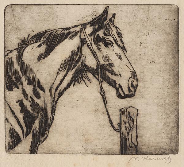 Viktor Hermély – Hlava koňa