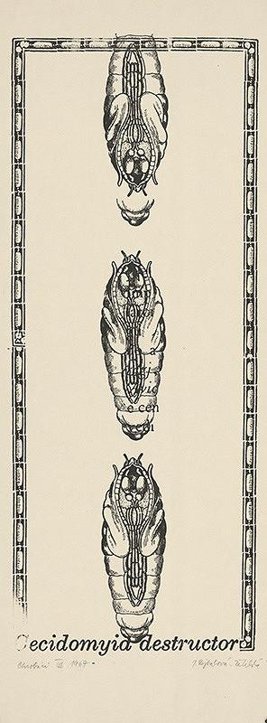 Jana Želibská – Bugs III.