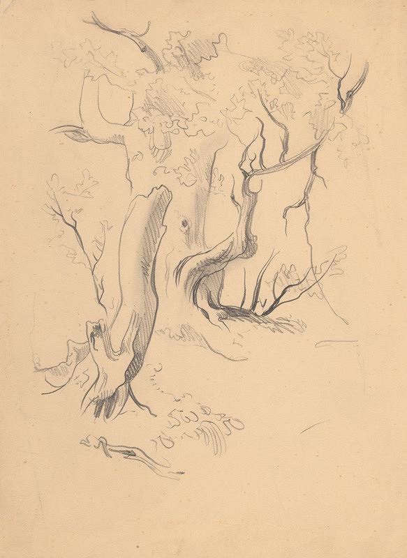 Ján Novák – Štúdia stromov