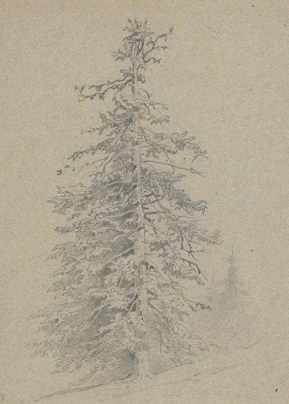 Friedrich Carl von Scheidlin – Study of a Coniferous Tree