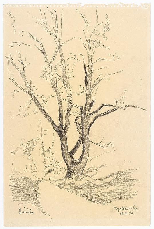 Anton Djuračka – Study of a Tree