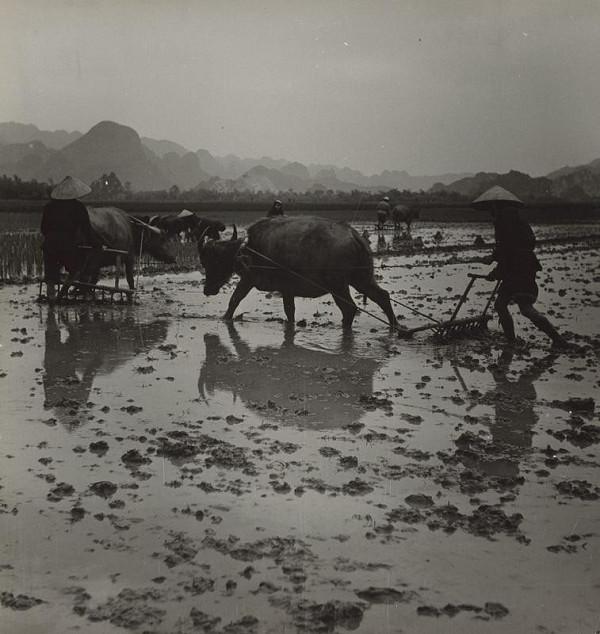 Ján Cifra – Vietnam. Oráči