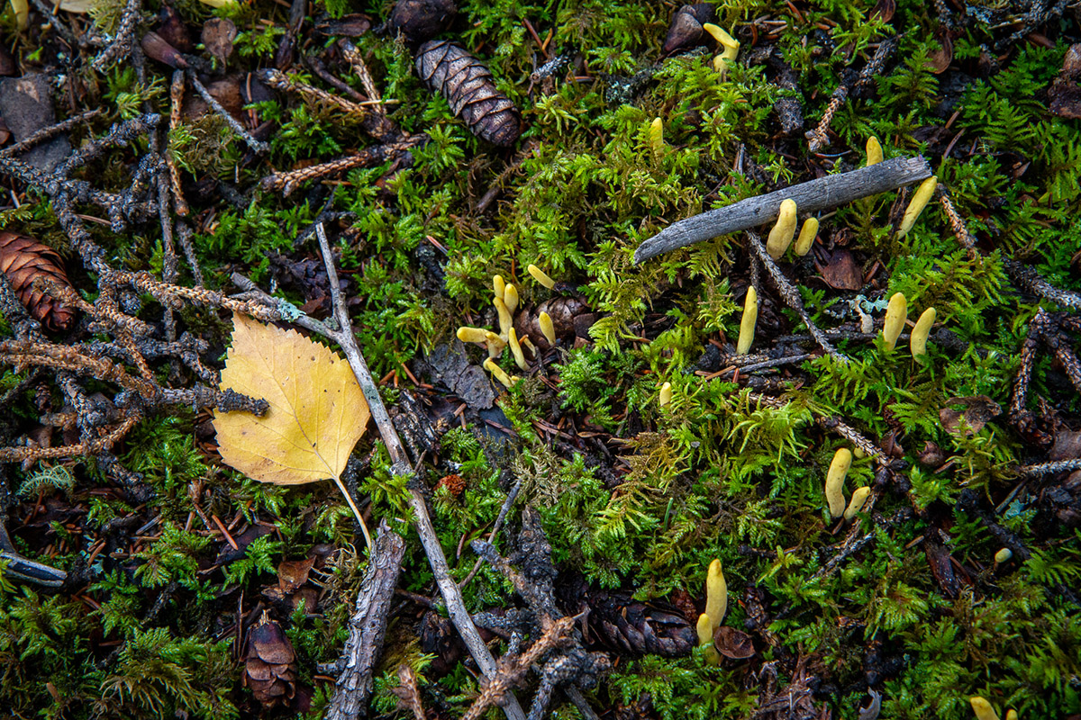 Arthur T. LaBar – Forest floor, Central Alaska